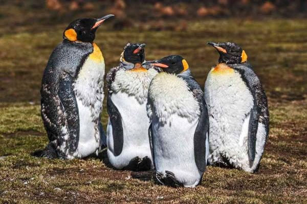 7 Facts About Penguins That Will Keep You Up At Night